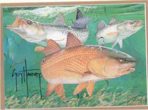 Image for Red Fish & Trout Print  (Artist Signed Print)