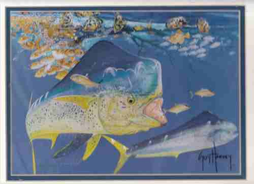 Image for Bull Dolphin (Artist Signed Print)